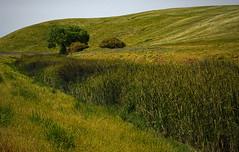 _DSC4263_v1 (rsh_945) Tags: ca nature livermore springtown