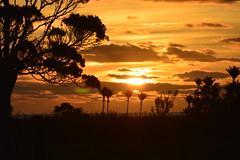 Sunset over the Tasman Sea (Bobinstow2010) Tags: newzealand tree tasmansea