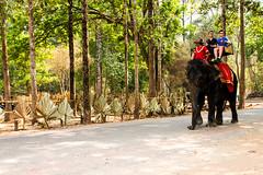 Sambo (Domy Kamsyah) Tags: elephant canon asia cambodia angkorwat explore traveling