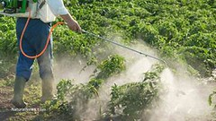 epa hid glyphosate cancer danger (tomwoods47) Tags: aka who mayday hid scam epa roundup monsanto bribery cancers herbicide glyphosate 20152016 herbicidepesticide toxinspoisons gmofoodnotrequired