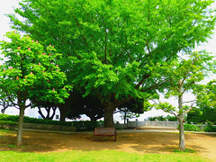 Wat A Beautiful Day! (human-faced bun) Tags: tree green grass bench wooden leaf day sunny