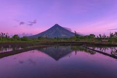 Diamond Mayon (arcreyes [-ratamahatta-]) Tags: reflection sunrise volcano nikon philippines mayon ricefields cagsawaruins legazpi albay 2015