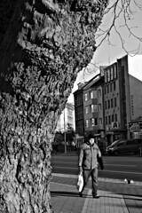 Holtenauer Straße (4) BW (Rüdiger Stehn) Tags: menschen leute 2016 kielblücherplatz strase 2000er 2000s holtenauerstrase europa mitteleuropa deutschland germany norddeutschland schleswigholstein bauwerk stadt profanbau baum bw schwarzweis schwarzundweis blackwhite blackandwhite monochrom monochrome gebäude canoneos550d kiel