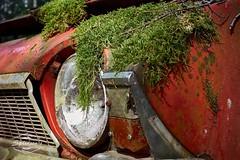 X100S_10-04-15_09-15-49 (spline_splinson) Tags: overgrown se rust sweden schweden rusty abandon oldtimer headlight junkyard oldcar rost scrap steeringwheel moos rostig rustycar scrapmetal brokencar redcar blinker schrott abandonedcar lenkrad carcemetery cardetails autofriedhof scheinwerfer schrottplatz tcksfors lostcar umweltverschmutzung altesauto overgrowncar abandoncar rostigesauto bastns ivansson junkyardsweden vrmlandsln splinson bastnaes carinthewood oldcarsweden
