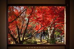 IMG_4828sf (M_Johns) Tags: travel red maple kyoto osaka nara kansai mjohns