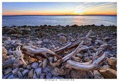ramo solitario (Giorgio Serodine) Tags: canon tramonto mare colore sole sassi ramo trieste controluce legno scogliera orizzonte allaperto