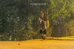 Y1428.0213.Hu Tho.Sapa.Lo Cai (hoanglongphoto) Tags: life road people sunlight plant color tree canon asian women asia afternoon outdoor bamboo vietnam dailylife sapa woodcutter sunnyafternoon gohome colorimage ngi hmongwomen mu cytre locai nng cucsng ithng hmongpeople ngoitri conng phn thcvt chu vietnamnorth nngchiu vnh ngnam buichiu hutho hngtre ngihmng bcvitnam ngi tiuphu canoneos1dx phnhmng nhmu canonzoomlensef70200mmf28lisiiusm lyci gici