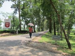 IMG_7014.jpg (Kuruman) Tags: sylhet bangladesh srimangal
