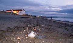 Herida (Rosano) Tags: marinas rosano pnestrecho zd1445 lalneadelaconcepcin laatunara e620