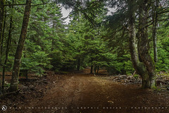 Path in the woods 2 (nikhrist) Tags: forest woods path nick greece parnitha attiki christodoulou
