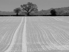 A Field in the Chiltern Hills (cycle.nut66) Tags: trees winter blackandwhite tree monochrome field lines four wheat horizon olympus line crop undulation grayscale zuiko thirds evolt e510