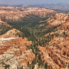 Trees in Bryce Canyon | Utah, USA (Chris Feichtner) Tags: trees nature canyon bryce iphonephotography iphoneonly
