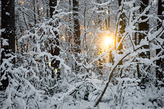 Fire And Ice (OR_U) Tags: trees winter sun white snow ice forest germany fire oru 2016 patbenatar helmstedt