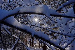 Sunstar on new snow (Brian Eagar Nature Photography) Tags: winter light snow tree ice nature outside december fuji fujifilm fujinon sunstar 2015 xf16 fujixt1