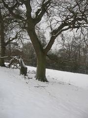 Snow in Feb 173