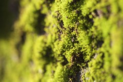 A Slice Of Moss (deckelsmouk_11) Tags: green moss bokeh