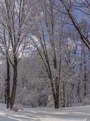 DSC01619-2 (johnjmurphyiii) Tags: winter usa snow connecticut shelly cromwell originaljpeg johnjmurphyiii 06416 sonycybershotdsch90