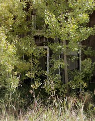 Easy access (Rocky Pix) Tags: county mountain home rockies gold living log cabin mainstreet colorado pix hill rocky boulder days mining shack nikkor aspen homage f8 monopod cabins 44mm rockypix 1100thsec normalzoom easeofaccess wmichelkiteley 2470mmf28f28g horsfallode