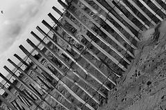 """Dune fencing (CJS*64 """"Man with a camera"""") Tags: blackandwhite bw monochrome lines fence mono blackwhite nikon dune fencing nikkor dslr sanddunes stannes cjs whiteandblack whiteblack nikkorlens 35mmlens dunefencing d7000 nikond7000 35mm18lens craigsunter cjs64"""