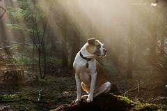 2/12 sunshine boy Edgar (Jutta Bauer) Tags: dog sun edgar sunrays boxermix pitbullmix 12monthsfordogs excellentedgar 12monthsforedgar