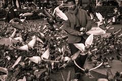Barcelone (jerema) Tags: noir pigeon catalunya et blanc ville barcelone oiseaux