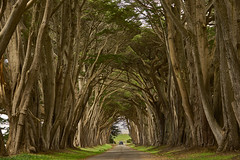 National Seashore / Point Reyes (swissukue) Tags: california usa tree landscape sony pointreyes a7 daarklands ilce7