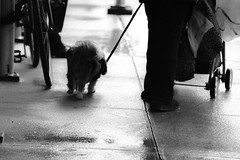 Dog (Vonstroepp Photo) Tags: street city bw newyork canon lens photography prime photos patrick 6d tappe