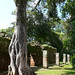 Arbol Corazon de piedra