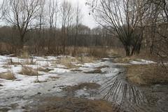 Spring scape (Daria Markova) Tags: spring oldgrass