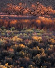 Morning Light (mitalpatelphoto) Tags: california travel winter usa colors grass landscape photography us nikon unitedstates visit adventure foliage explore mammoth bishop easternsierras
