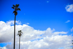 LA Pair ( In 2 Making Images | L.A.) Tags: losangeles noon dramaticsky losangelesskyline cloudysky elysianpark policeacademy latimes discoverla