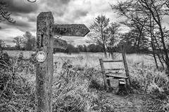 Signpost (andythekeys) Tags: old trees england blackandwhite monochrome grass sign clouds contrast surrey guildford footpath