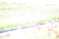 20160324-DSC_0020