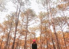 D ' R A N   .    V A L L E Y (Ri) Tags: forest vietnamese pov vietnam redhat valley bella dalat dran iphoneography mobiography iphone6s