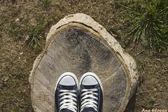 converse (Ana Eloysa) Tags: parque arbol madera zapatos zaragoza converse tronco marron suelo tierra anaeloysa aeloysa