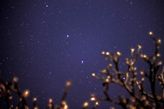 Look at the stars, look how they shine for you (vallero_sonia) Tags: trees light cold colors night stars lights star spring universe notte stelle