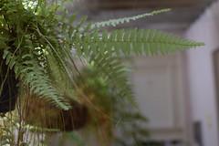 Jardim de Inverno (gildeondacostacarvalho) Tags: nikon 35mm18 d3300