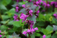 Wildblume (Hugo von Schreck) Tags: flower macro blume makro wildflower f13 wildblume tamron28300mmf3563divcpzda010 canoneos5dsr hugovonschreck