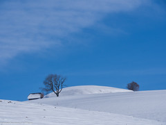 Winter landscape  - Winterlandschaft (somareja*pictures) Tags: winter schweiz switzerland flickr natur weiss winterlandschaft olympusem10 markusreber somarejapictures