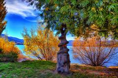 Deep Roots - Wanaka NZ (Kevin_Jeffries) Tags: travel autumn trees newzealand holiday art monument nature beauty screw wooden nikon flickr sundial wanaka drill woodturning mincer d90 glendhubay nikond90 kevinjeffries