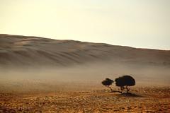Desert tree (Neal J.Wilson) Tags: world morning travel trees mist nature silhouette fog early sand gulf desert middleeast oman deserts sanddunes wahiba sharqiya