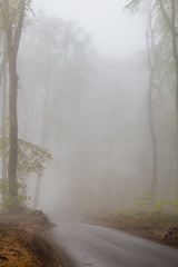 IMG_3448 (ZoRRaW photography) Tags: mist tree fog forest spring luxembourg neuhausgen