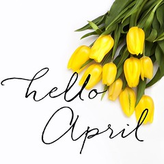Hello April, hello birthday month! Hopefully warmer weather and sunshine! Wedding season can't come soon enough! (Nicole Amanda Photography) Tags: hello birthday wedding sunshine weather season square photography blog photographer ottawa cant come april hopefully engaged month enough soon warmer weddingphotographer ottawaweddingphotographer weddingphotographyblog instagram