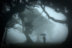 The enchanted forest (Mr.Enjoy) Tags: old trees light boy mist portugal weather silhouette fog fairytale danger contrast standing forest umbrella dark landscape scary fantastic poem cross transformation character branches dream folklore unesco spooky adventure story vision fantasy journey enjoy ethereal unknown mysterious if dreamy strength wisdom passage creatures majestic laurel rite magical madeira depth enchanted odds til worldly worldheritage refuge courage rudyardkipling prepared unpredictable fanal madeiraisland macaronesia ocoteafoetens creautures infinitexposure simonzinophotography
