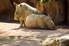 _DSC6182 (alessandro.spagnolli) Tags: zoo natura tamronlens naturalistica lecornelle parcofaunistico sonyalpha77