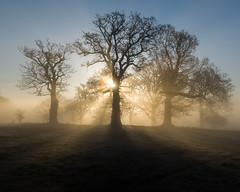 Morning Glory (Photography by Tosh) Tags: park uk morning trees england sun mist tree photography dawn woods nikon unitedkingdom norfolk national trust gb d750 nationaltrust daybreak eastanglia blickling martintosh
