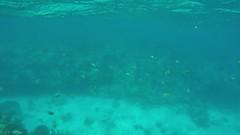 Snorkeling in Looe Key, FL - 4.30.16 (carissaconti) Tags: ocean sea fish coral keys florida tropical reefs looe
