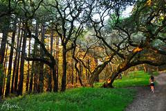 _AKU7087 (Large) (akunamatata) Tags: california sunset berkeley miller trail joaquin joachim