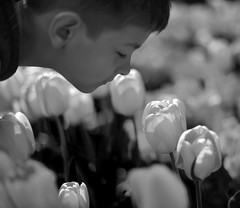 Stop and Smell (JasonCameron) Tags: thanksgiving flowers boy white black flower cute monochrome festival point utah kid spring child tulips stop smell tulip monday