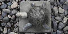 toshogu shrine. nikko, japan 6974 (s.alt) Tags: city japan stone shrine turtle unescoworldheritagesite unesco nikko shinto shintoshrine toshogushrine worldheritage nikk   tochigiprefecture nikkshi nikktshg kant shrinesandtemplesofnikk